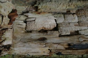 St-Catherines-Fort-052012-Inside-wooddetail1