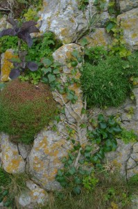 St-Catherines-Fort-052012-Ouside-rockdetail1