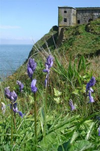 St-Catherines-Fort-052012-Outside-fortwithbluebells