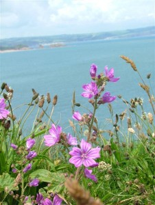St-Catherines-Fort-062012-Purple-f1