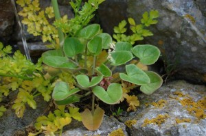 St-Catherines-Fort-062012-rockplant2